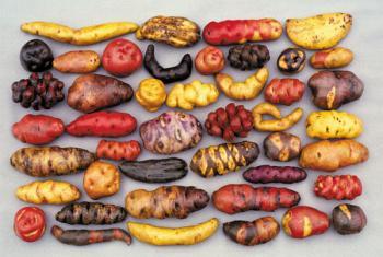 圖片來源:http://www.isgtw.org/feature/conserving-bio-diversity-perus-cip
