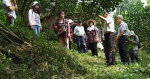 大雪山林農草生栽培觀摩