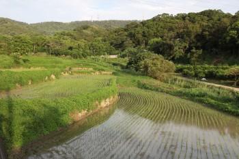 蕉埔里山的梯田美景