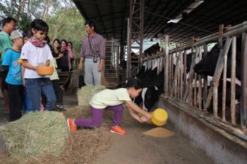 酪農與牛奶 泉井牧場 餵牛