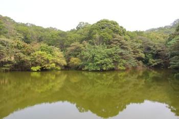 里山的水塘