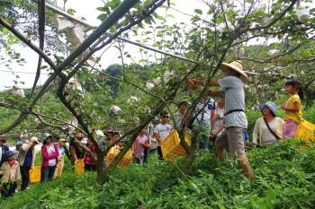 「漫步在梨的故鄉活動」