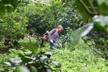 佳樂觀光果園-除草中