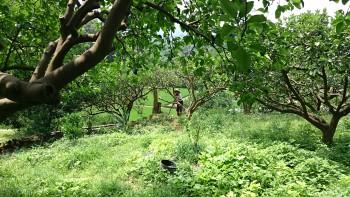 青果社--蜂蝶自然農園
