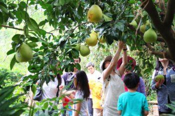 里山柑橘香