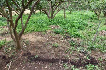 吉利觀光果園-施肥