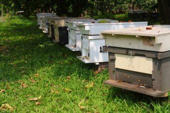 吉利觀光果園蜂箱