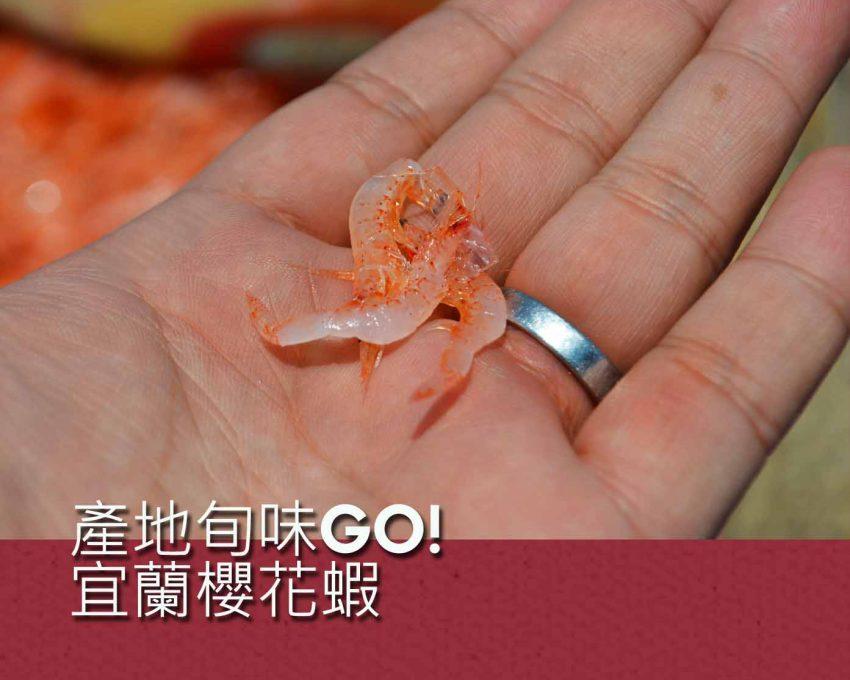 產地旬味GO!宜蘭櫻花蝦活動照片1