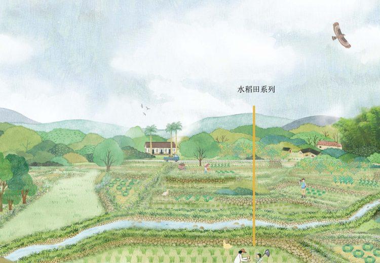 水稻田系列2